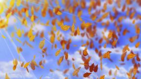 Falling autumn brown oak tree leaves on a bright sunny day blue sky background. Fall weather. Wind and dry leaves. Seamless video HD footage. White background Vector Illustration