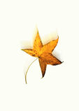 Falling autumn leaf Royalty Free Stock Image