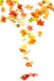 Falling Autumn Leaves Stock Photography