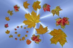 The falling autumn leaves Royalty Free Stock Photos