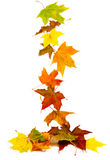 Falling autumn leaves. Falling colorful autumn maple leaves background royalty free stock photos
