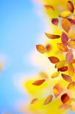Falling Autumn Leaves. Colorful falling leaves in autumn royalty free stock photos