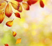 Falling autumn leaves royalty free stock photo