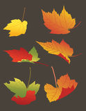 Falling Autumn Leaves Royalty Free Stock Photography