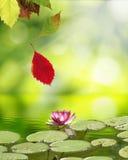 Falling Autumn Leaves Stock Image
