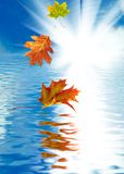 Falling autumn leaves above the water Royalty Free Stock Photos