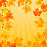 Falling Autumn Leaves background Stock Photography