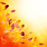 Falling autumn leaves background Stock Images