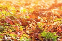 Falling autumn leaves background. Colorful foliage in the park. Falling leaves natural background. Autumn time. Colorful autumn le. Aves background stock photography