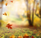 Falling Autumn Leaves background. Falling Autumn Leaves in the forest stock photos