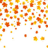 Falling autumn leaves background. Royalty Free Stock Photography