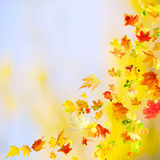 Falling Autumn Leaves. Autumn background with falling and spinning maple leaves royalty free stock image