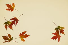 Falling autumn leaves. On beige background stock image