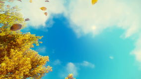 Falling autumn leaves and blue sky background stock video