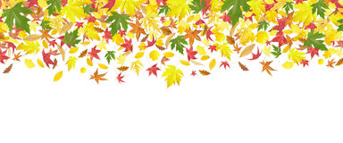 Falling autumn leaves border Stock Photos