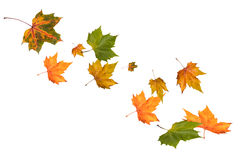 Falling autumn leaves. In different colors royalty free stock photography