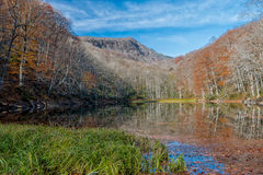 Falling autumn leaves in Lake Naganuma Royalty Free Stock Photo