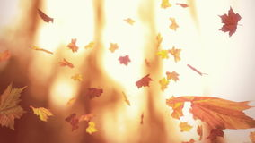 Falling autumn leaves. Looped animation