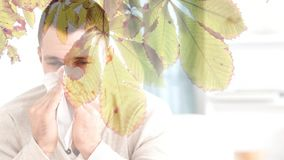 Falling autumn leaves and man sneezing while suffering from allergy. Digital composite video of falling autumn leaves and man sneezing while suffering from stock video