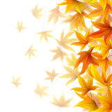 Falling autumn leaves Royalty Free Stock Images