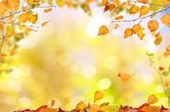 Falling autumn leaves natural background . royalty free stock photos