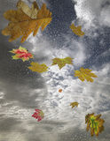 The falling autumn leaves and raindrops. On a window pane Vector Illustration
