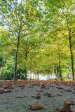 Falling autumn leaves with sun ray in beautiful park. Nijmegen, the netherland royalty free stock photo