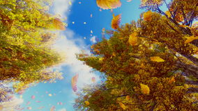 Falling autumn leaves and sunny sky