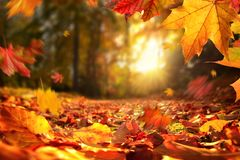 Falling Autumn leaves before sunset royalty free stock images