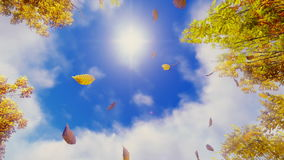 Falling autumn leaves and sunshine sky slow motion stock video footage