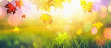 Falling Autumn Maple Leaves Colorful. Fall Season royalty free stock photos