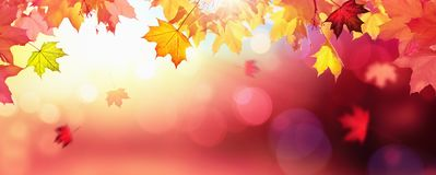 Falling Autumn Maple Leaves Natural Background stock images