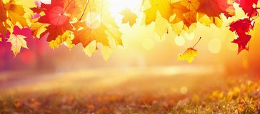 Falling Autumn Maple Leaves Natural Background. Falling Autumn Maple Leaves Natural Colorful Background stock photos
