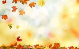 Falling autumn maple leaves natural background . stock photography