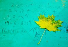 Beautiful maple leaves in the fall royalty free stock image