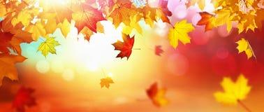 Falling Autumn Maple Leaves Natural Background. Falling Autumn Maple Leaves Natural Colorful Background stock illustration
