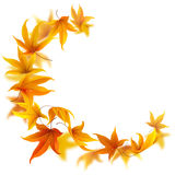 Falling autumn maple leaves vector illustration