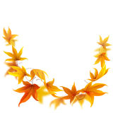 Falling autumn maple leaves royalty free illustration