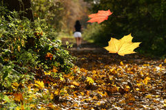 Falling Autumnal leaves. Closeup of Autumnal leaves falling in wood with jogger running in background Royalty Free Stock Image