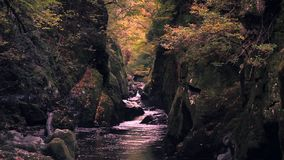 Fairy Glen Gorge Waterfall at Autumn in North Wales. Falling autumnal leaves at Fairy Glen Gorge waterfall in Snowdonia National Park, North Wales, UK stock video