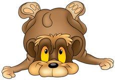 Falling Bear Royalty Free Stock Photos