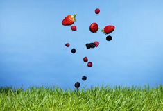 Falling berries. Fresh berries falling onto grass Royalty Free Stock Image