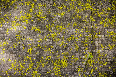 Falling blossom pattern on Cobble-stone pavement Stock Images