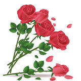 Falling bouquet of red roses vector illustration