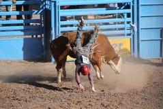 Falling bull rider Royalty Free Stock Photo