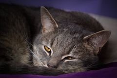 Sleeping cat on bed. Falling cat on a bet royalty free stock images