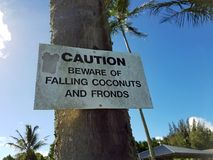 Falling Coconuts Caution Sign Stock Photos
