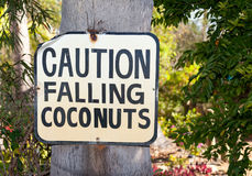 Falling coconuts. Sign you only see in tropics Royalty Free Stock Image