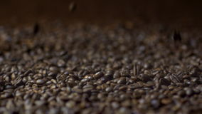Falling Coffee Beans in Slow Motion stock video footage