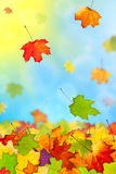 Falling colorful autumn leaves. Against blue sky Royalty Free Stock Image